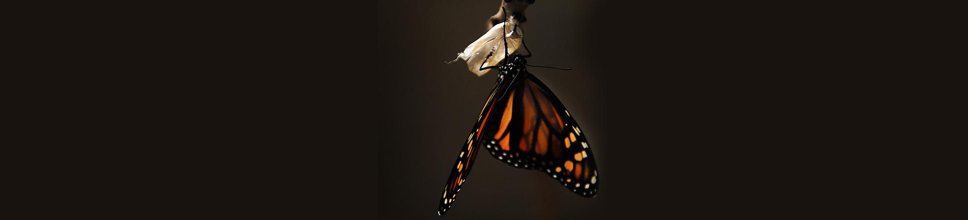 metamorphosis change